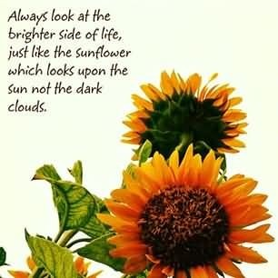 Always look at the brighter side of life just like the sunflower which looks upon t