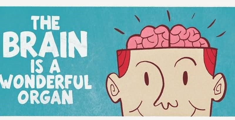 an introduction to the human brain a miraculous organ