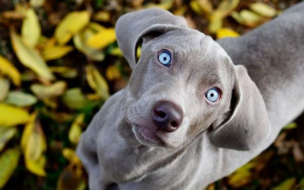 Adorable grey dog
