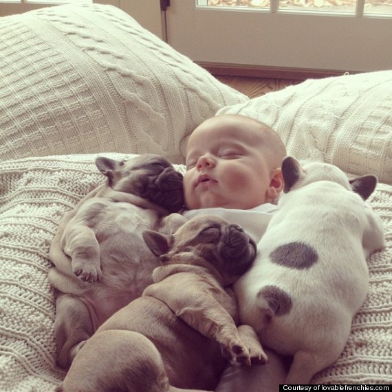 Baby sleeping with bull dogs