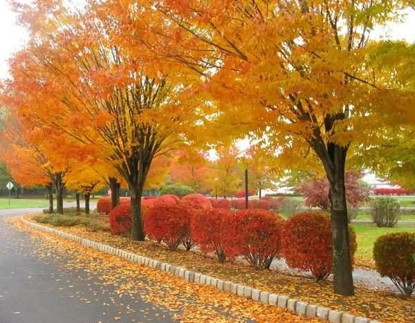 Beautiful autumn season 002