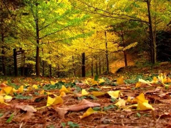 Beautiful autumn season fall
