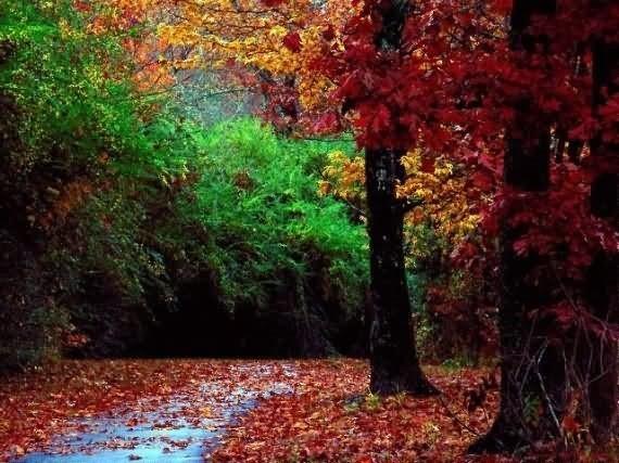 Beautiful autumn season image