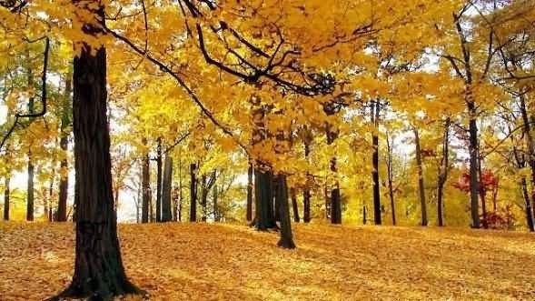 Beautiful autumn season picture