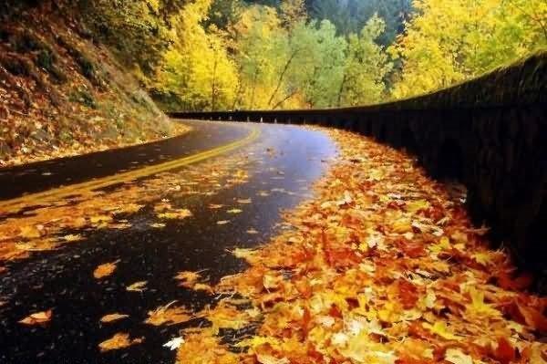 Beautiful leaves on road during autumn season