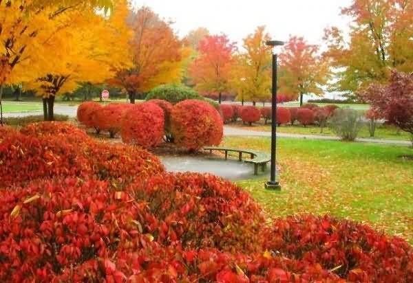 Beautiful park during autumn season