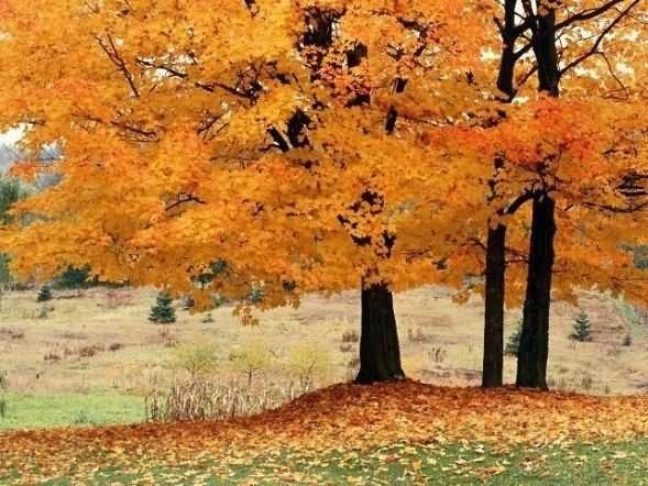 Beautiful tree during autumn season