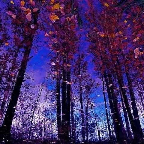 Beautiful trees in autumn season