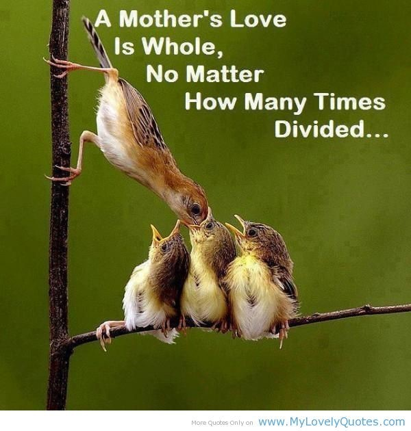 A mothers love is whole no matter how many times divided