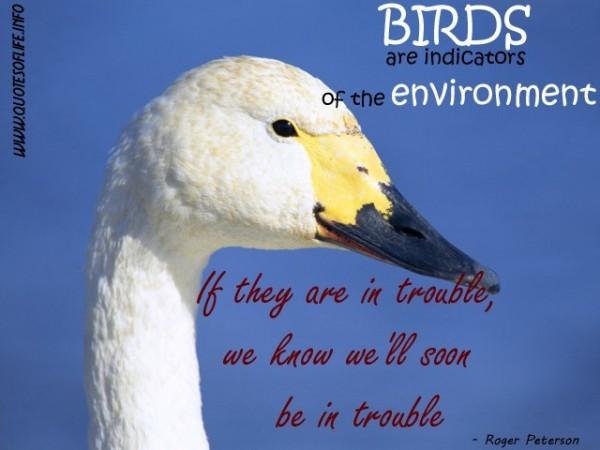 Birds Quotes Storemypic