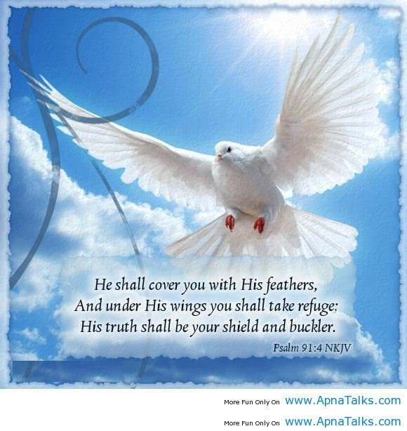 He shall cover you with his feathers and under his wings you shall take refuge