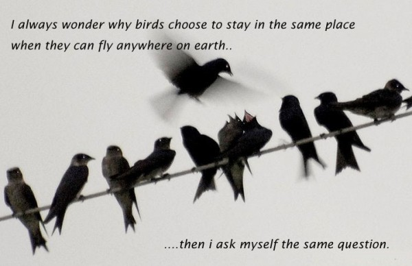 I always wonder why birds choose to stay in the same place when they can fly anywhere on