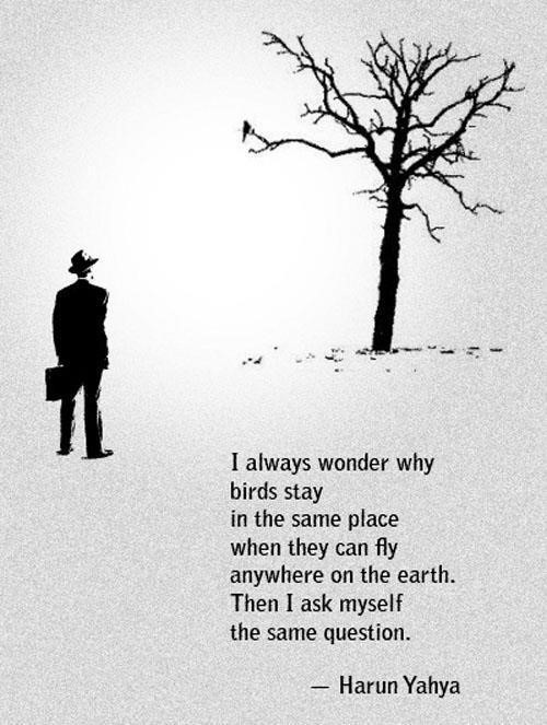 I always wonder why birds stay in the in the same place