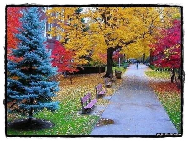 Colorful trees in autumn season