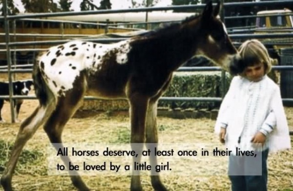 All horses deserve at least once in their lives to be loved by a little girl