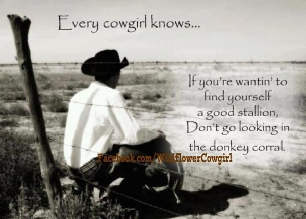 Every cowgirl knows if youre wantin to find yourself a good stallion