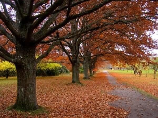 Desktop wallpaper for autumn season