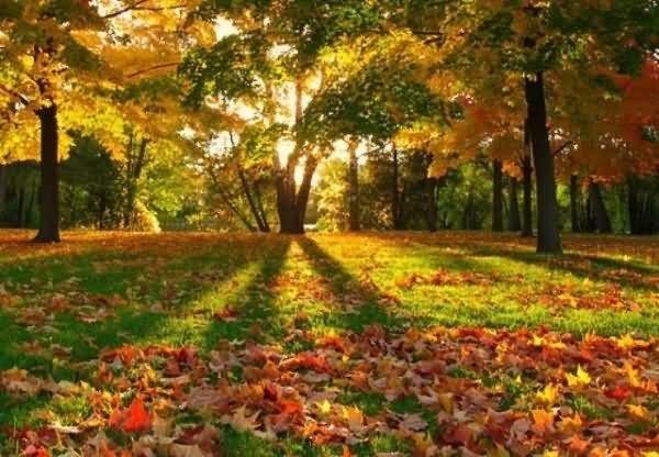 Desktop wallpaper of autumn season