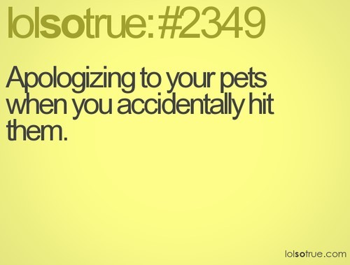 Apologizing to your pets when you accidentally hit them