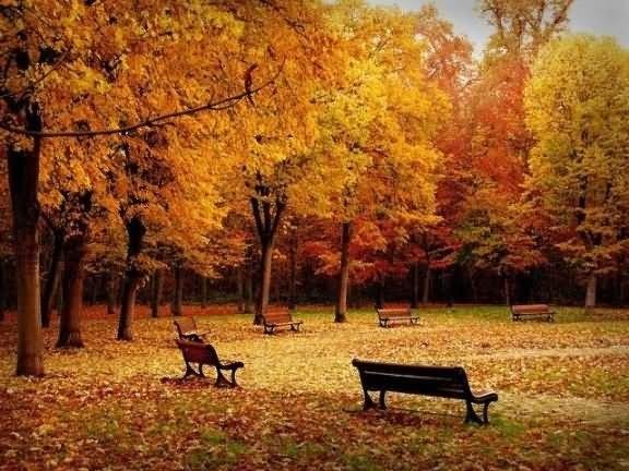 Empty benches in garden during autumn season