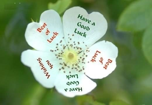 Have a good luck best of luck on leaf