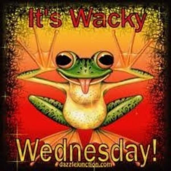 Its wacky wednesday frog
