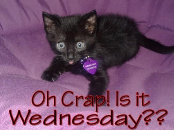 Oh crap is it wednesday kitten