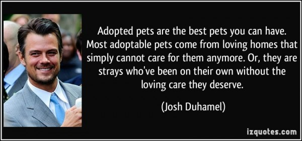 Adopted pets are the best pets you can have most adoptable pets come from loving homes