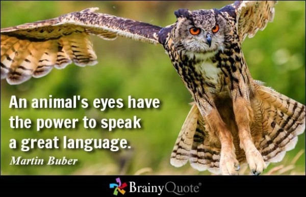 All animals eyes have the power to speak a great language