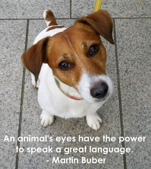 An animals eyes have the power to speak a great language martin buber