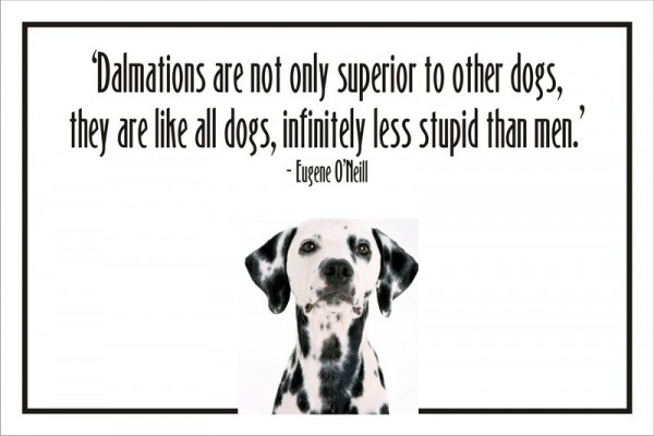 Dalmations are not only superior to other dogs they are like all dogs infinitely less stu