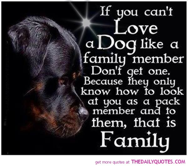 If you cant love a dog like a family member dont get one