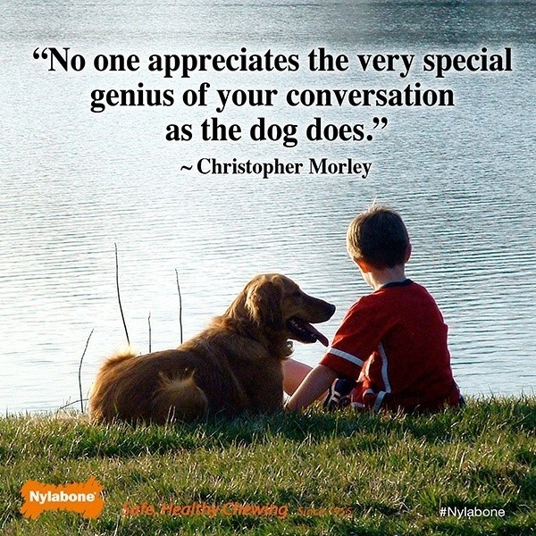 No one appreciates the very speacial genius of your conversation as the dog does