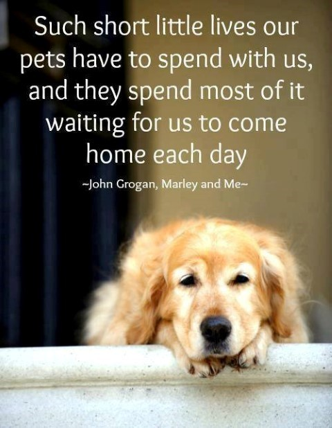 Such short little lives our pets have to spend with us and they spend most of it waiting
