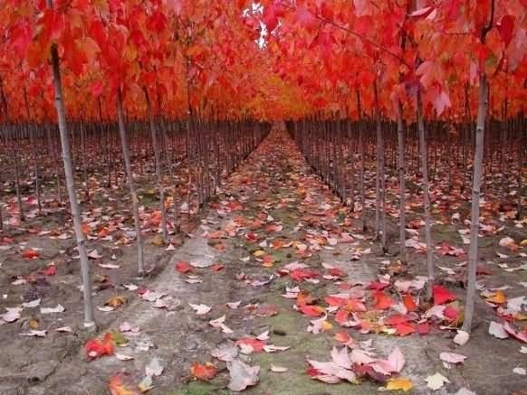 Red color trees during autumn season