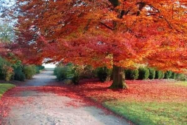 Tree looking beautiful in autumn season