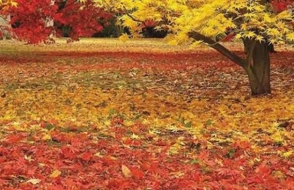 Wish you a very happy autumn season