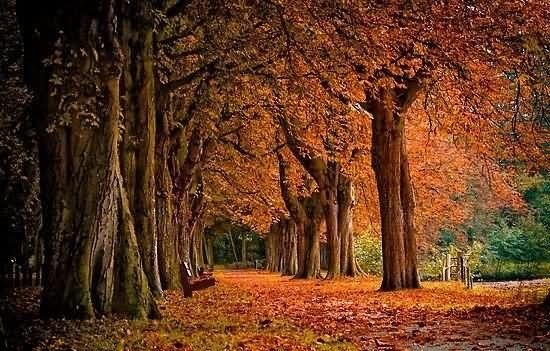 Wish you all happy autumn season
