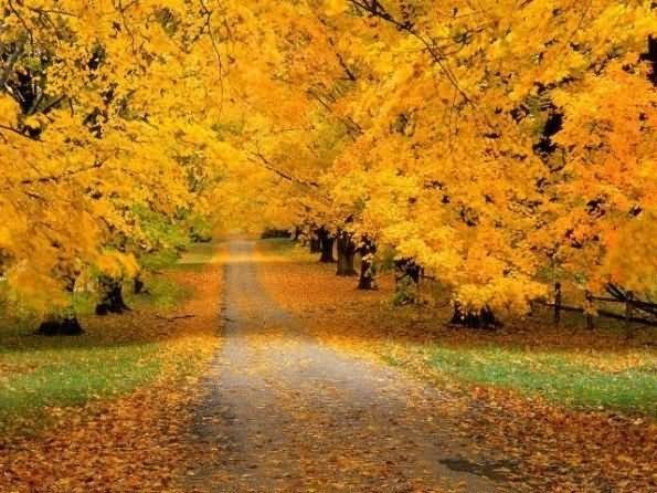 Yellow leaves beautiful autumn season