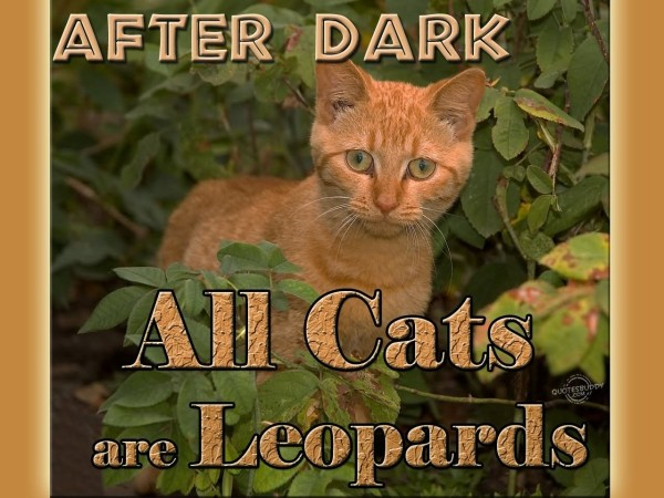 After dark all cats are leopards