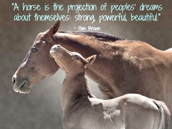 A horse is the projection of people dreams about themselves strong powerful beautiful