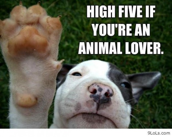 High five if youre an animal lover