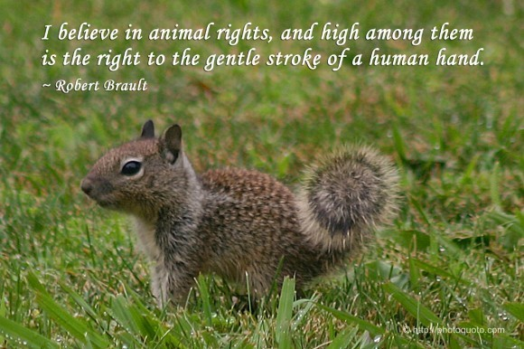 I believe in animal rights and high among them is the right to the gentle stroke of a h