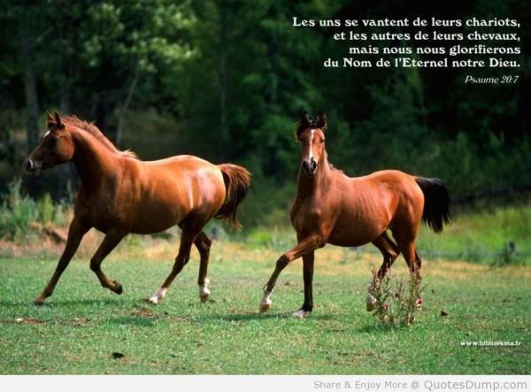 Les uns se vantent de leurs chariots et les autres de leurs chevaux