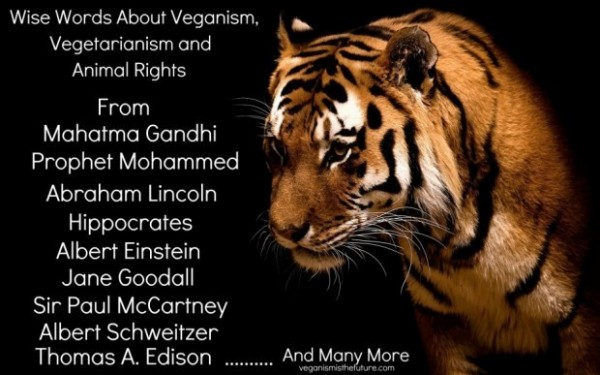 Wise words about veganism vegetarianism and animal rights