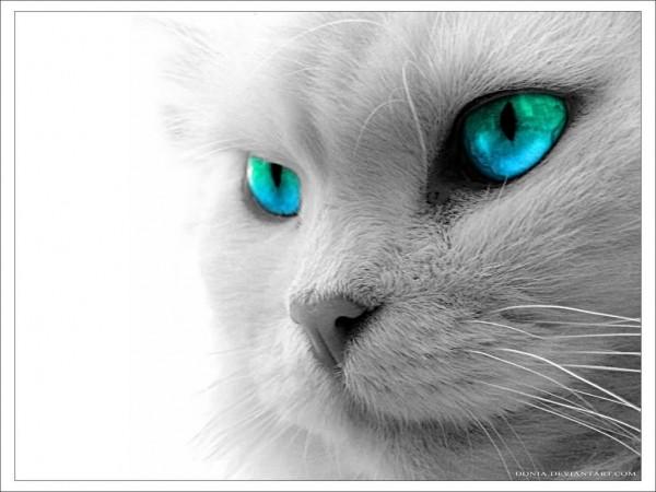 Beautiful cat face