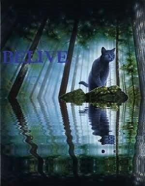 Belive cat