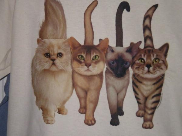 Cats wallaper