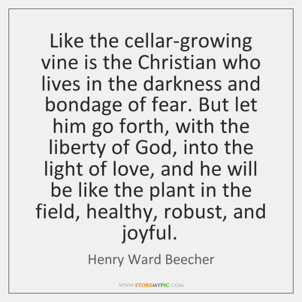 Like the cellar-growing vine is the Christian who lives in the darkness ...