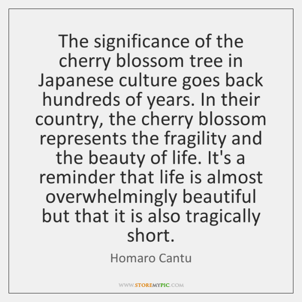 The significance of the cherry blossom tree in Japanese culture goes back ...